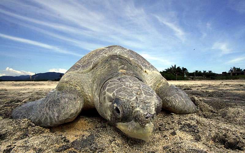 Turtlewatching Costa Rica