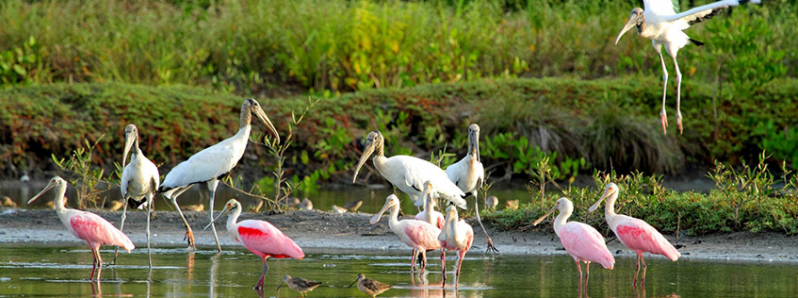 Costa Rica birdwatching: Bird Challenge positions the destination