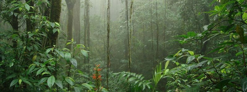 Classic Costa Rica Vacation Packages: visit Monteverde Cloud Forest