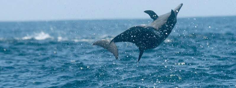Whales & Dolphins In The South Pacific Of Costa Rica