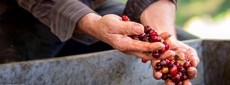 Costa Rica Coffee: Its production and where to enjoy it!