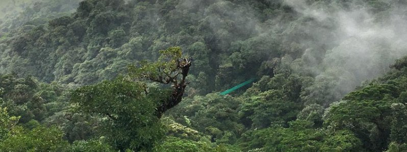 Costa Rica Increases Its Forests While Latin America Was Deforesting