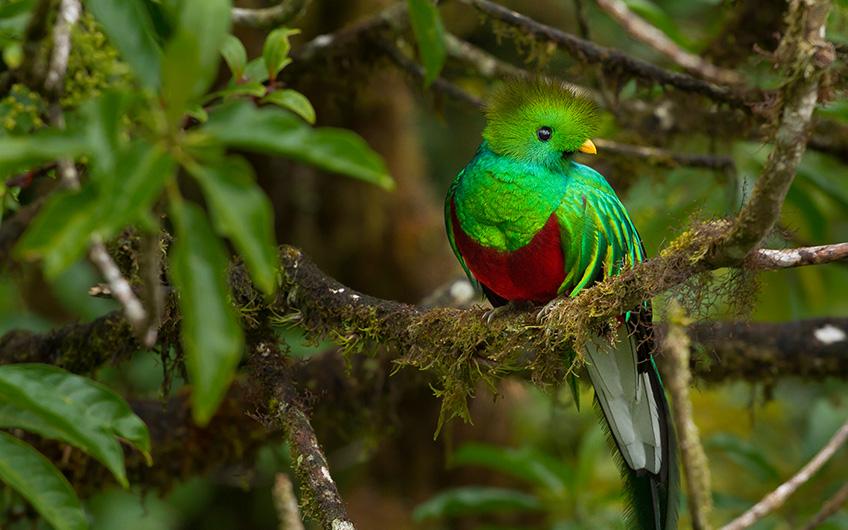 Juan Castro Blanco national Park, Quetzal