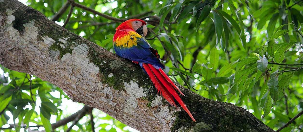 Resultado de imagen para Parque Nacional Carara