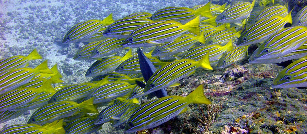 Caño Island Diving Or Snorkeling