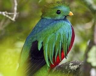 Santa Elena Biological Reserve