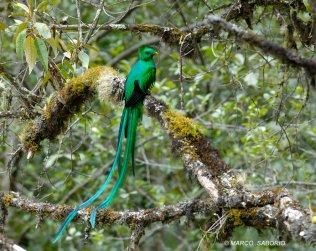 Walking Quetzal Tour