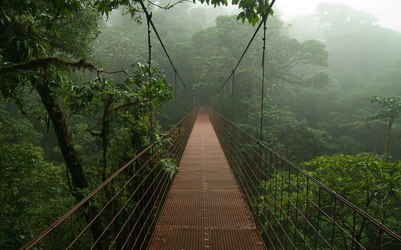 a hanging bridge in monteverde cloud forest reserve