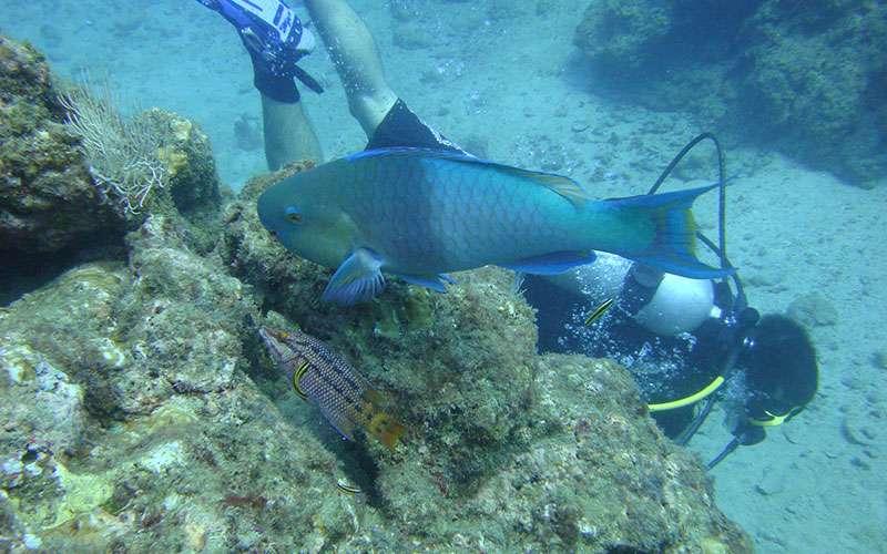 Isla del Caño, Costa Rica, Scuba Diving