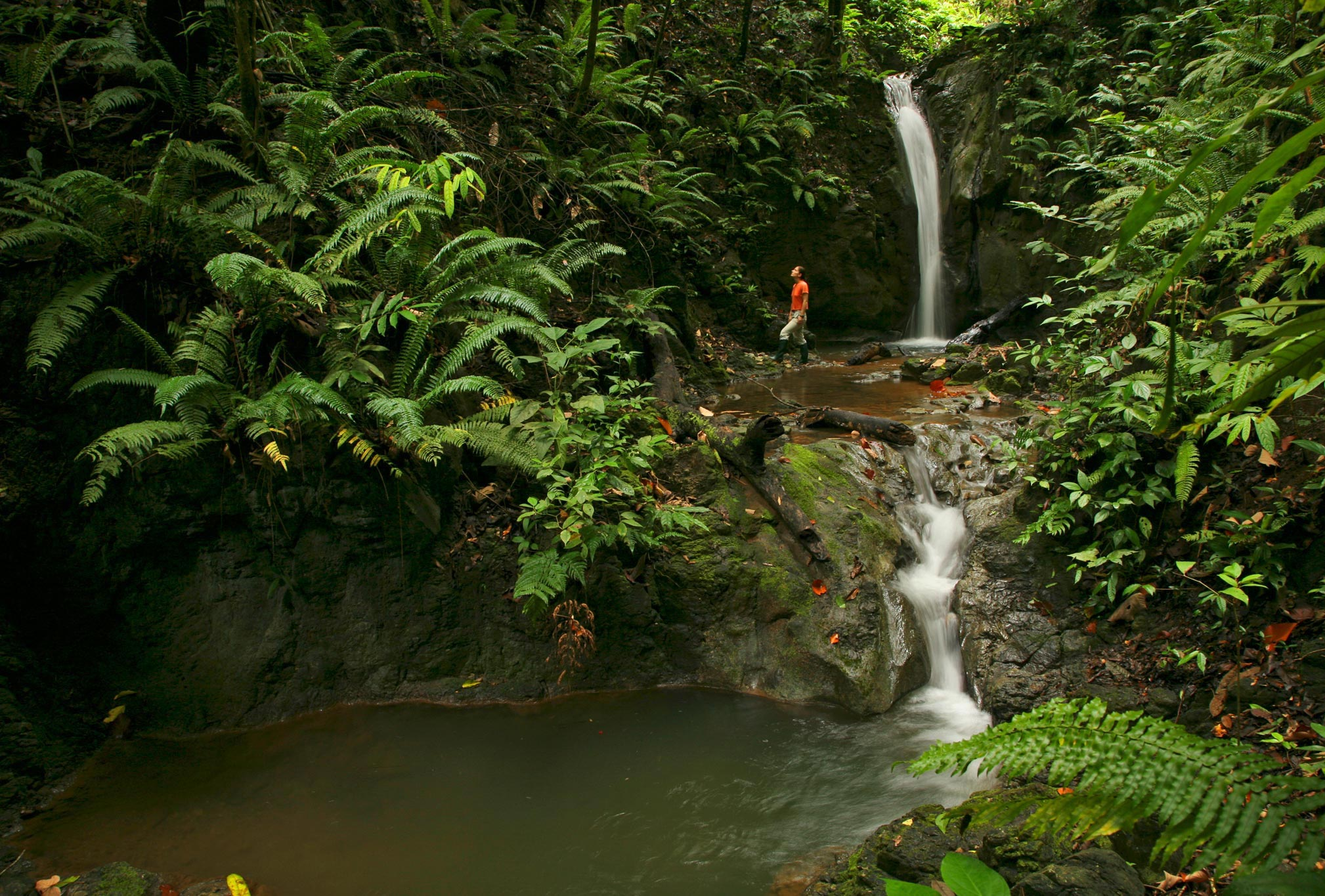 trip costa rica essay The best vacations happen when kid-friendly hotels offer accommodations to meet the needs of each family member book your costa rica trip today.
