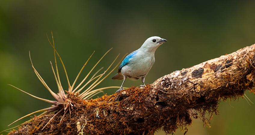 Batsu Birding & Photography Garden