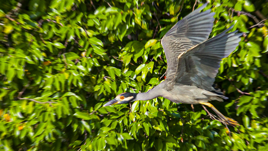 Digital birding catalogue