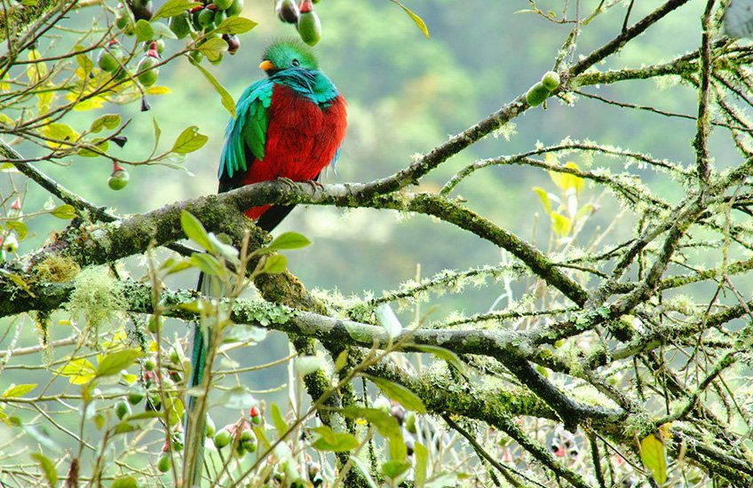 Free country with a Quetzal, Costa Rica Travel Tips: Enjoying Your Travel Abroad