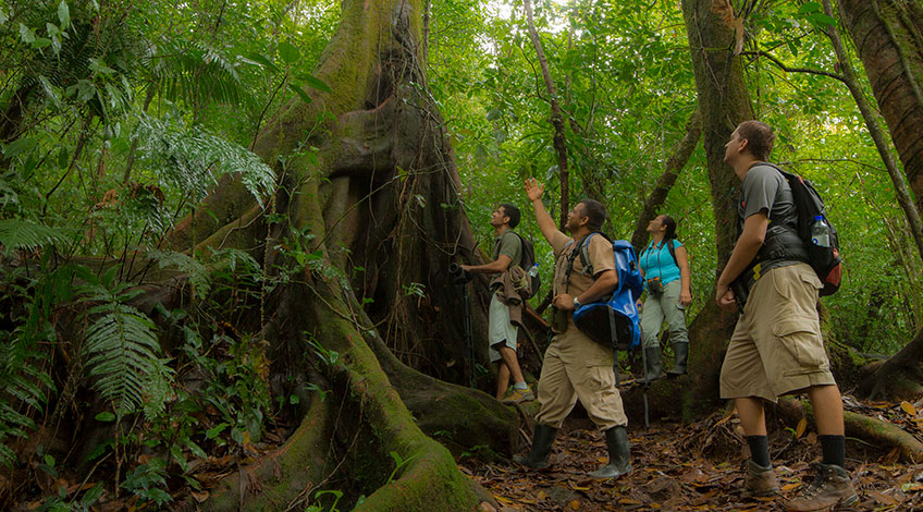 Costa Rica travel: Why visit the country with Travel Excellence?, Hiking in the Forest