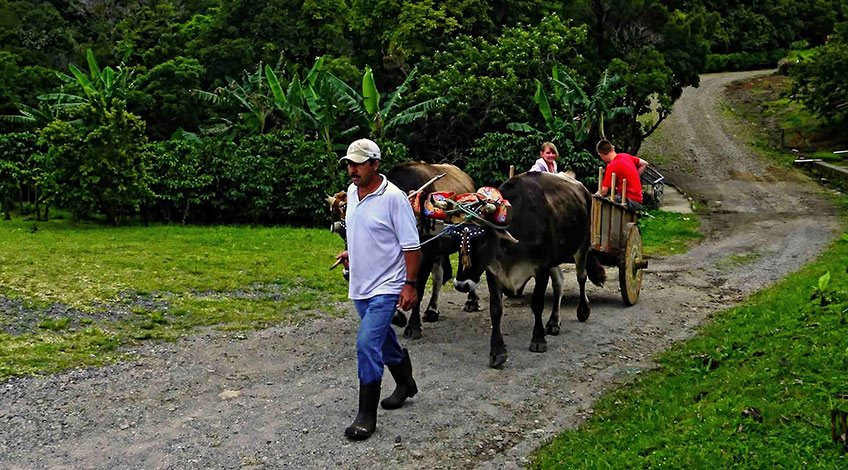 Classic Costa Rica Vacation Packages: visit Monteverde Cloud Forest Coffee Tour