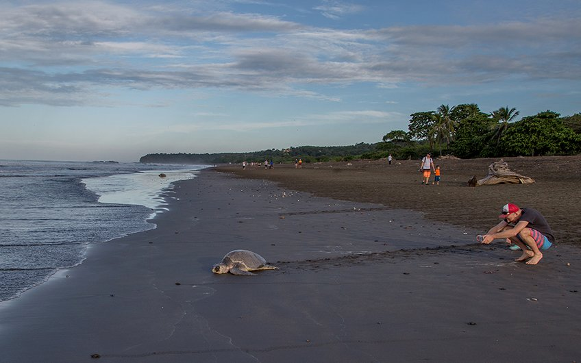 Costa Rica turtles: Ostional National Wildlife Refuge