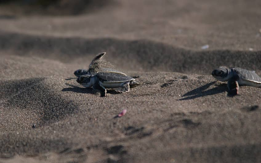 Costa Rica map of turtle nesting in Tortuguero National park