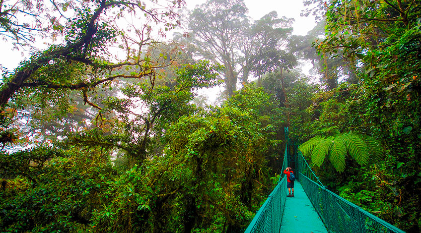 Costa Rica, Monteverde Cloud Forest: Hanging Bridges