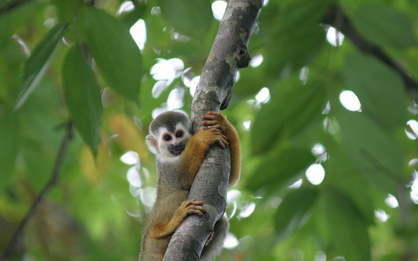 Why do you need to have vacations in Costa Rica Titi Monkey