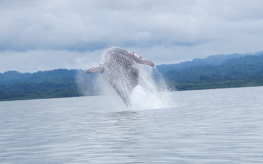 Costa Rica See Whales and Dolphins Map in Southern Pacific