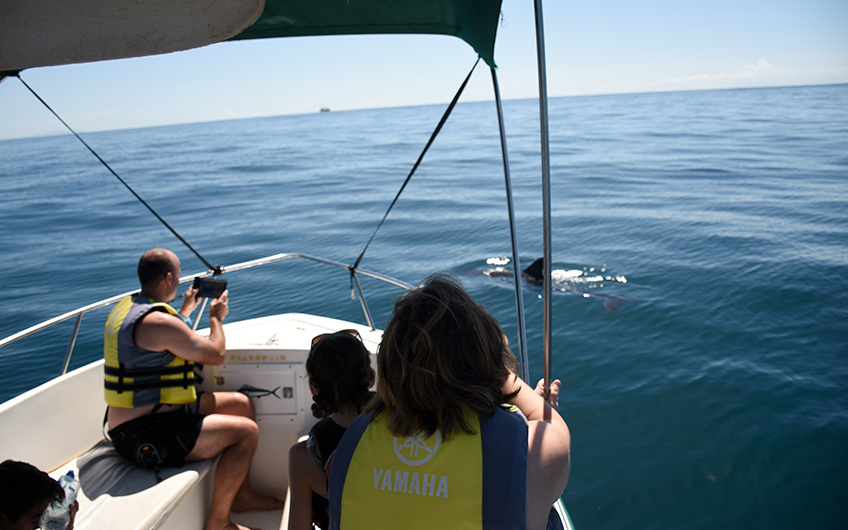 Costa Rica See Whales and Dolphins Map in Bahia Ballena