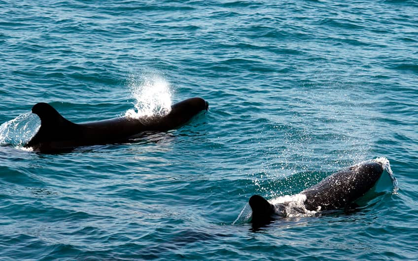 Costa Rica See Whales and Dolphins Map in Central Pacific watching season