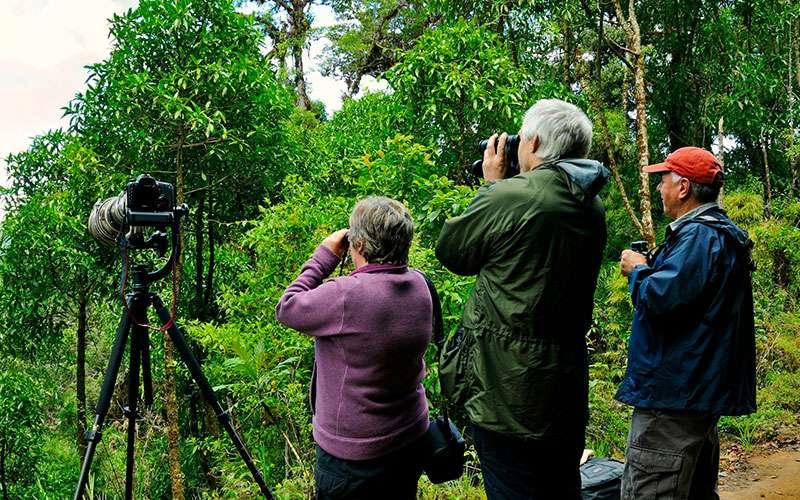 Rainforest Birds Flying Bird Watching
