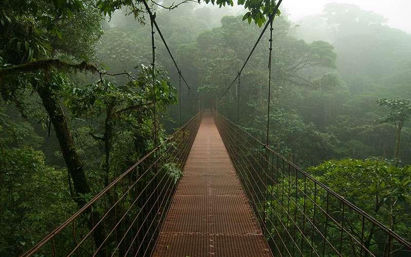 Costa Rica Tropical Rain Forest