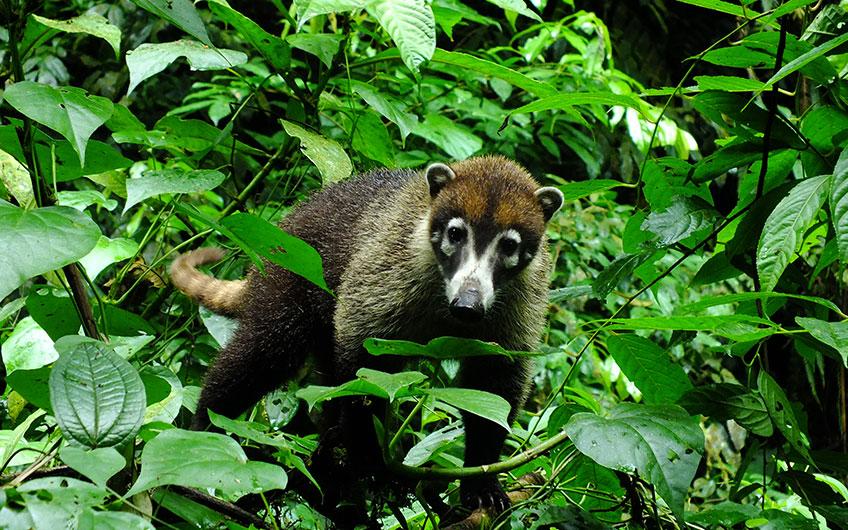 La Ceiba Private Reserve
