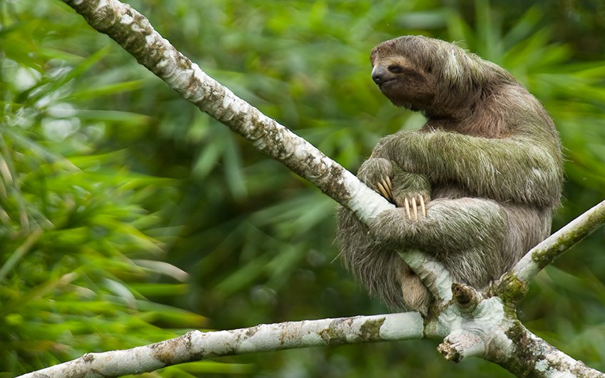 Travel Guide: See Sloths in Sloth Santuary of Costa Rica in Cahuita, Limón
