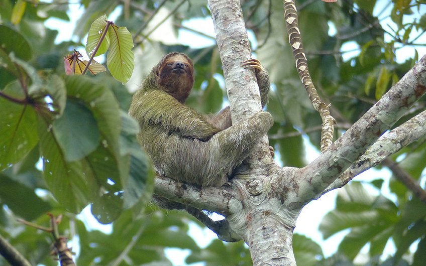 Travel Guide: See Sloths in Tour de Sloth with Travel Excellence in Tortuguero National Park, Caribbean, Costa Rica