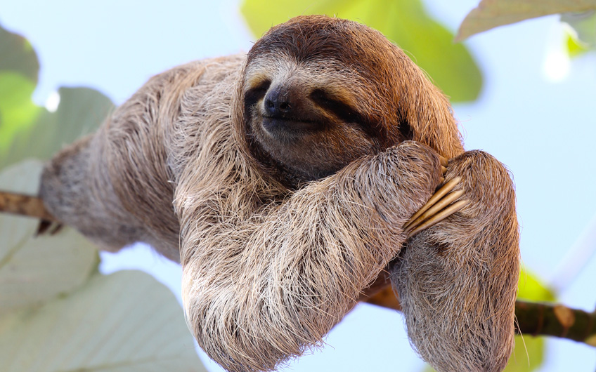 Travel Guide: See Sloths in Sarapiquí Costa Rica