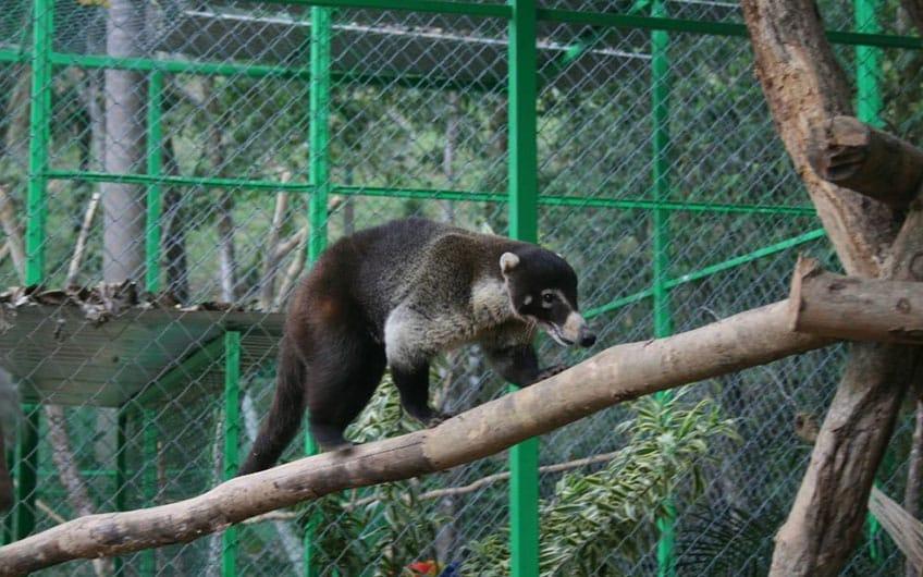 Alturas Wildlife Sanctuary