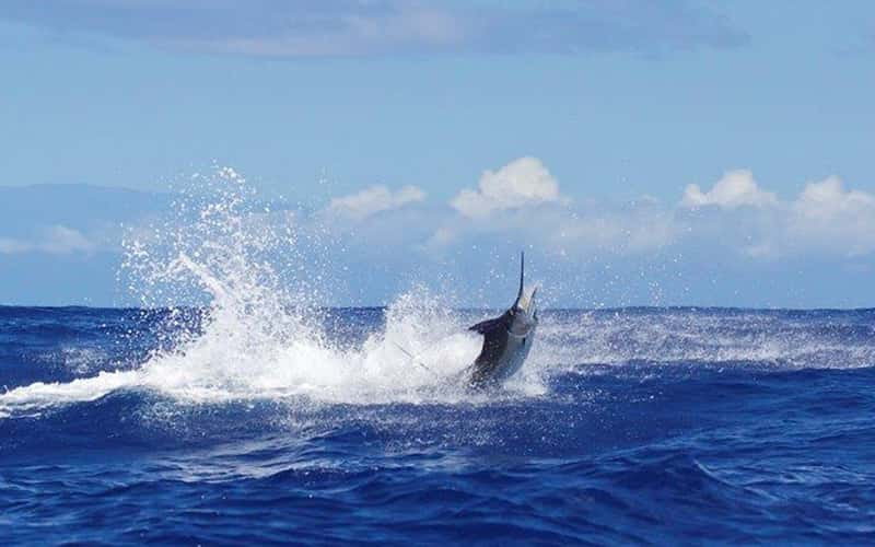 Guía para vacaciones de pesca en Costa Rica