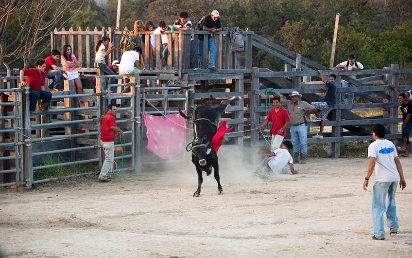 """Stierreiten ist eine lokale Tradition in Santa Cruz Guanacaste, wo die Kultur der """"Sabaneros"""" noch immer sehr stark ausgeprägt ist und die Einheimischen es genießen, sie mit Ausländern zu teilen."""