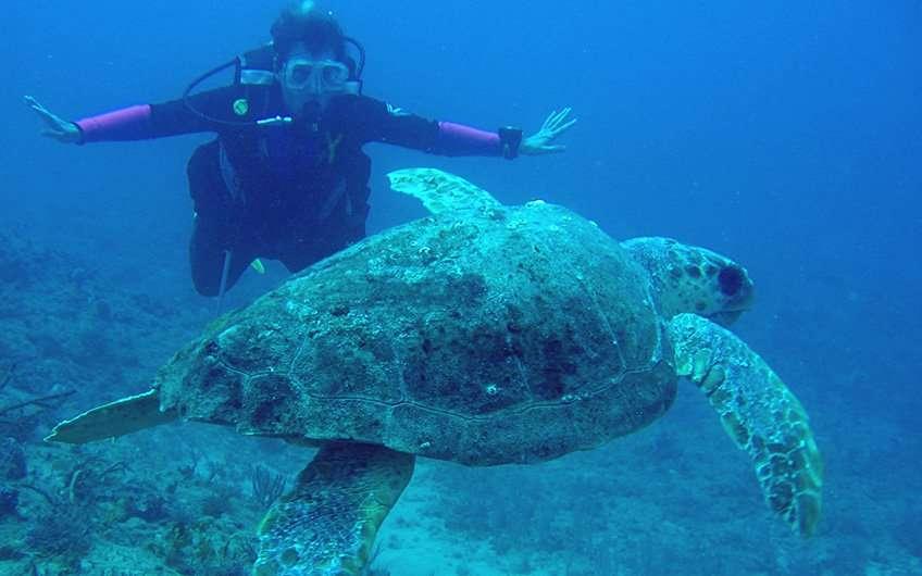 Tauchen und Schnorcheln in Guanacaste Costa Rica gibt Ihnen unglaubliche neue Einblicke in die wilde Unterwasserwelt Costa Ricas. Sie sehen eine Schildkröte in dem Foto.