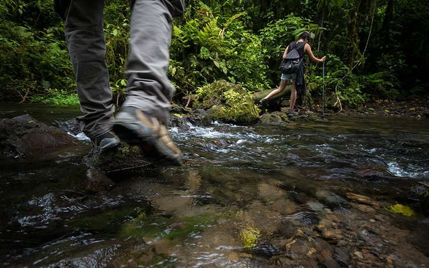 Sie können Ihre Guanacaste-Reise nicht beenden, ohne eine Wanderung durch seine Wälder erlebt zu haben. Die Durchquerung der kleinen Flüsse und der dichten Artenvielfalt ist ein absolutes Abenteuer!