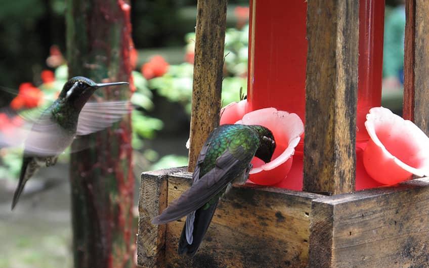 Monteverde Costa Rica, Hummingbird Garden