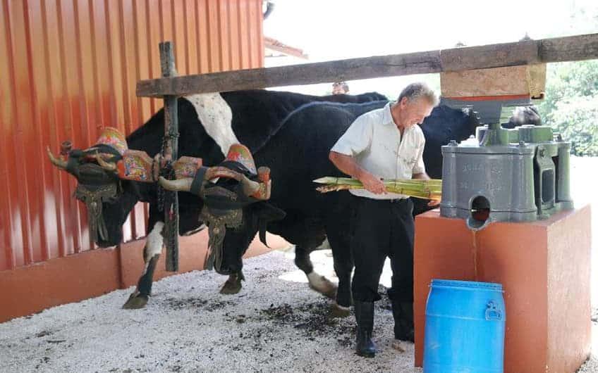 """Monteverde Costa Rica, Sugar cane Mill """"Trapiche"""" Tour"""