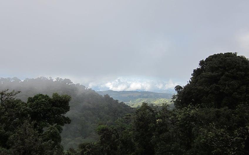Monteverde Costa Rica, Monteverde Cloud Forest Reserve