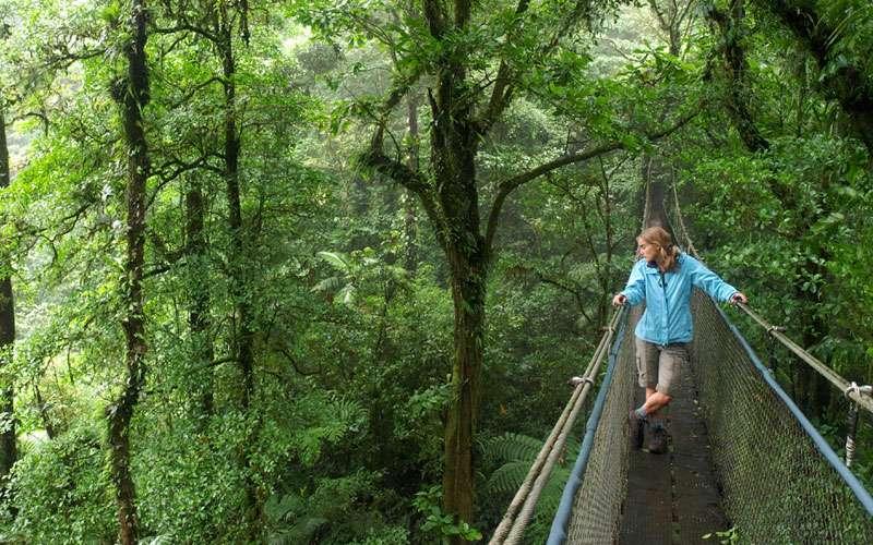 Walking selvatura park hanging bridges