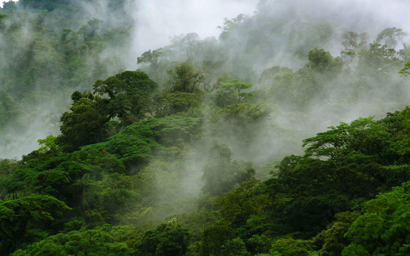 Monteverde Cloud Forest Reserve is an amazing natural place that has been named several times as one of the most beautiful forests of the world.