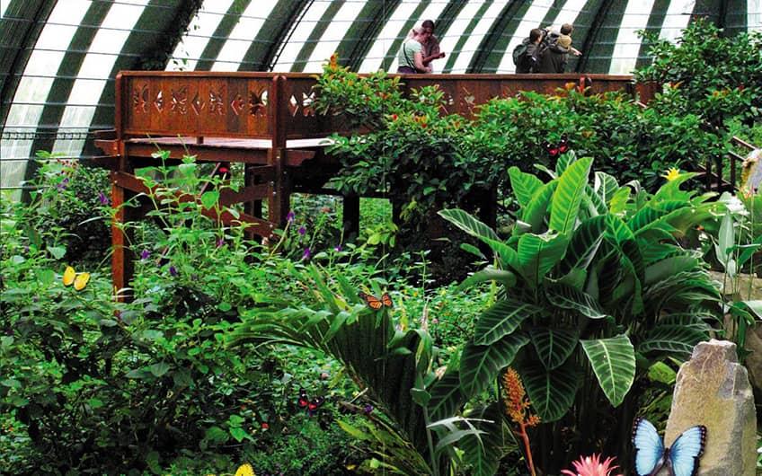 Monteverde Costa Rica, Monteverde Butterfly Garden