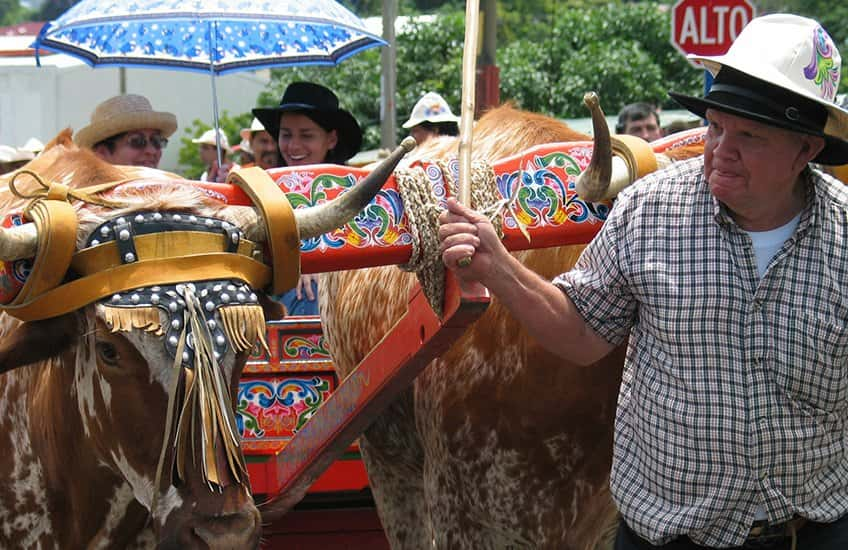 Sarchi's ox carts are colorful and handmade so it's a total spectacle to enjoy a parade of it in San Jose when you are on vacation.