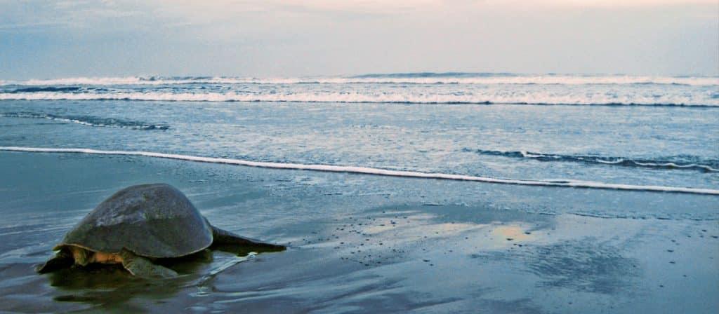 temporada de tortugas
