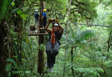 Forest canopy tour