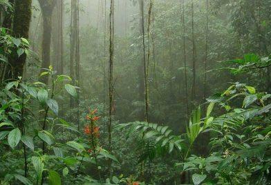 Reserva Monteverde