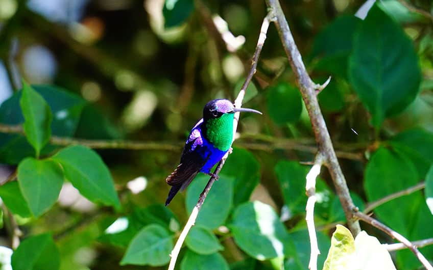 Costa Rica bird watching in Turrialba