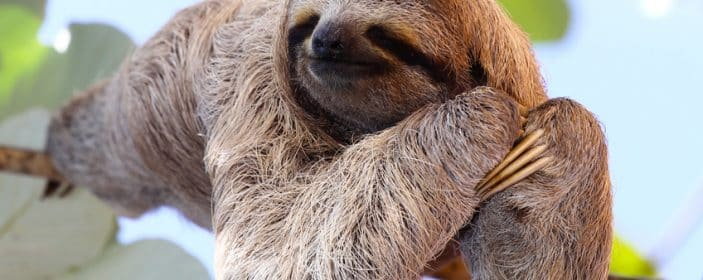 Complete guide on how & where to see Sloths in Costa Rica